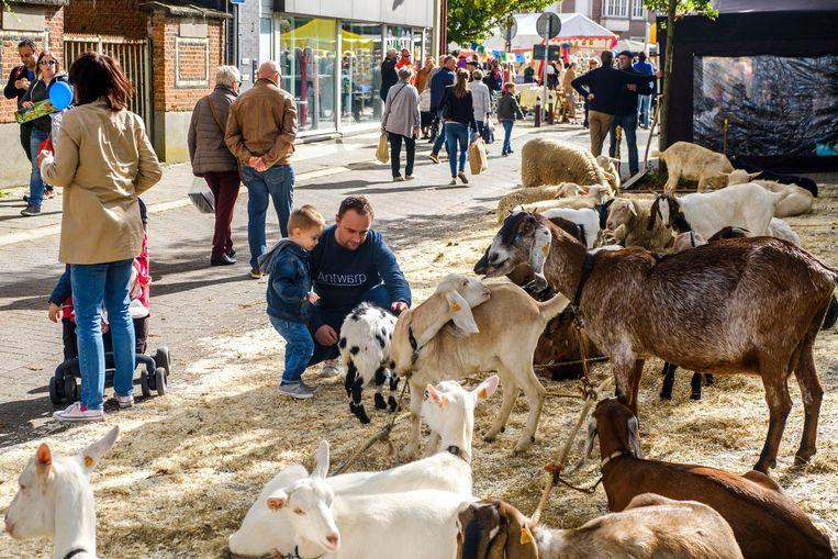 Een man aait samen met een jongetje de geiten die deelnemen aan de veeprijskamp.