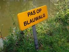 Blauwalg bij sluis 9 in Helmond