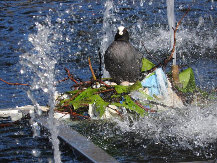 Deze meerkoet zat in zwaar weer op een fontein bij de Noorderbrug in Rotterdam.