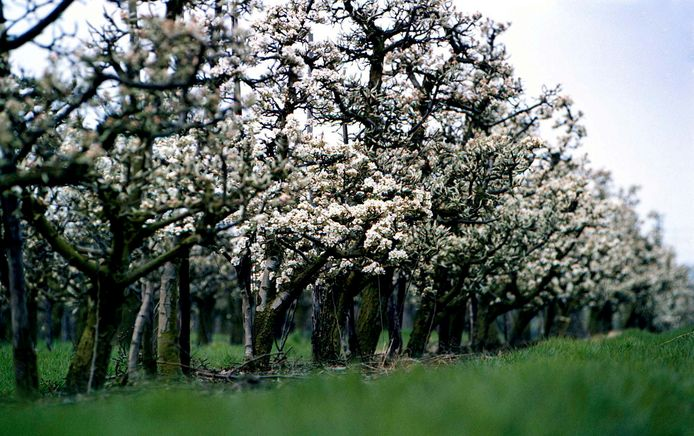 Perenboomgaard
