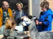 Alpaca's zorgen voor lachende gezichten in Middelburg