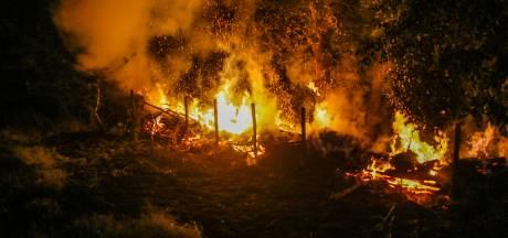 Groenstrook in Helmonds natuurgebied vat vlam nadat groep jongeren vuurwerk afsteekt