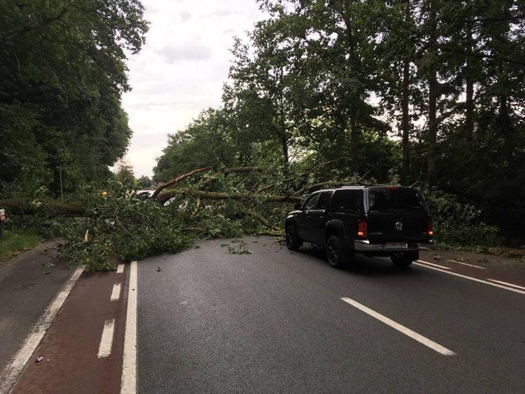 De enorme boom kwam een fractie van een seconde achter de Fiat van het koppel neer.