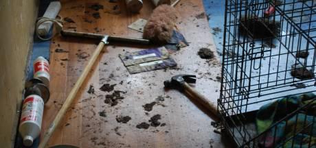 Politie gaat praten met Vlaardinger die kat thuis opsloot en liet uithongeren