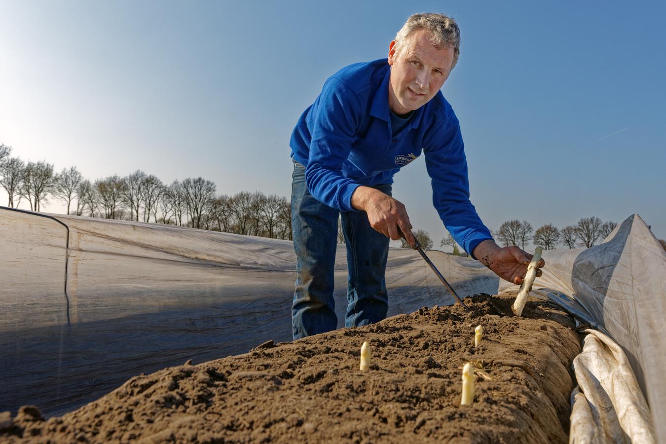 Aspergeteler Marco van Aart uit Breda tussen zijn asperges.