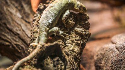 Serpentarium verwelkomt boomskink