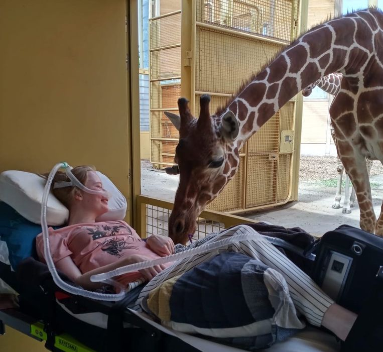 De foto met de giraffe ontroert velen op sociale media.