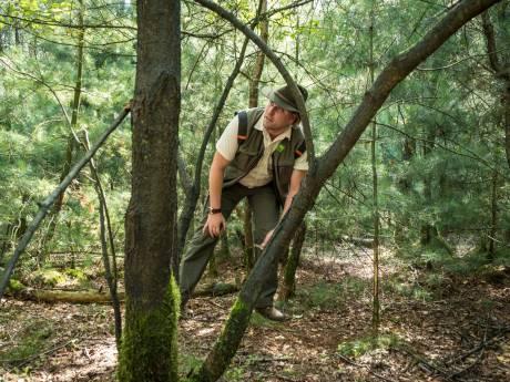 Kappen is noodzaak: lariksbomen houden door droogte en kever geen stand in Veluwse bossen
