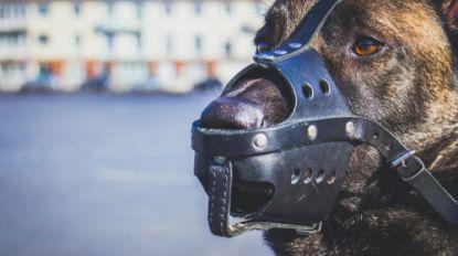 Oostenrijkse soldaat gedood door twee militaire honden