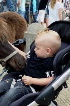 Topdrukte bij paardenmarkt Heenvliet