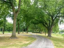 Meierijstad wil met boomcafés begin maken aan nieuw bomenbeleid