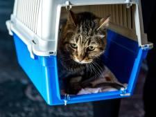 Partij voor de Dieren: Neem geen dieren in beslag bij mensen met geldzorgen