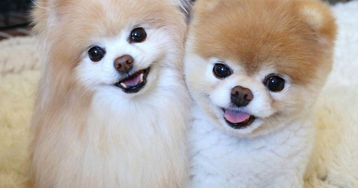 Schattigste Hond Ter Wereld Gestorven Van Verdriet Quot Zijn
