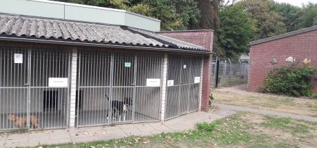 Verlies Dierentehuis Den Bosch bijna 55.000 euro