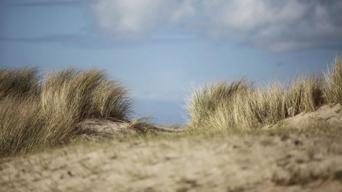 Duinen bij het strand