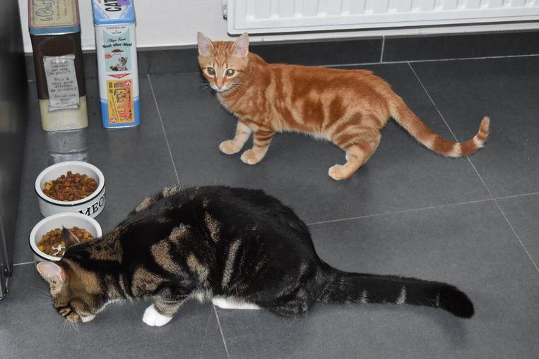 Hun andere katten houden de buurvrouwen angstvallig binnen.