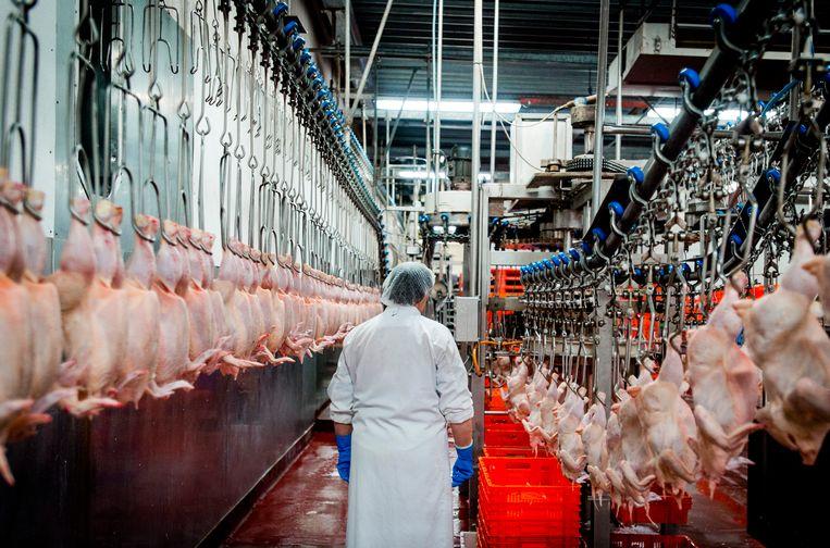 Archieffoto van een kippenslachterij. Beeld ANP
