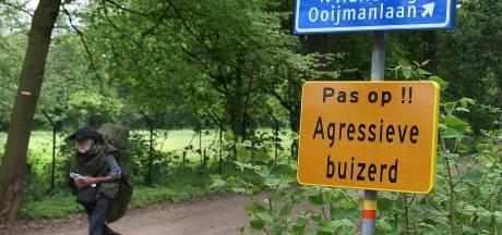 'Terrorbuizerd' grijpt weer een hardloper in hoofd bij 't Onland in Doetinchem