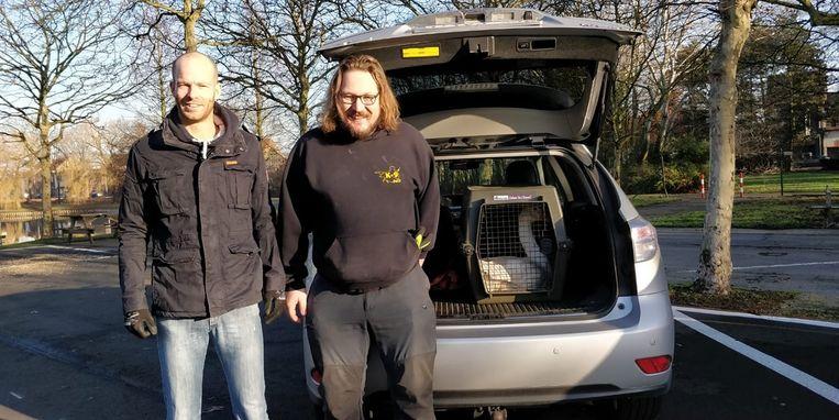 Jonas Wielandt en vrijwilliger Wesley De Witte brachten de tamme gans naar het VOC in Merelbeke.
