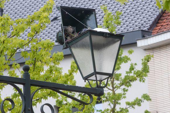 Een koppel duiven heeft haar nest gemaakt in een lamp van een lantaarnpaal op de Markt van Wetteren.
