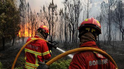 Portugal wil minder eucalyptussen na hevige bosbranden
