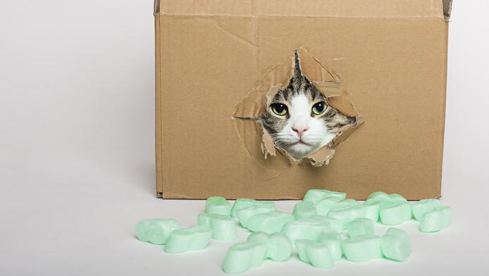 De Reden Dat Katten Zo Van Kartonnen Dozen Houden Nieuws