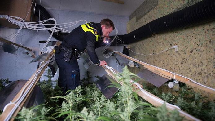 De politie nam bij diverse controles in totaal zo'n 12.000 hennepplanten in beslag.