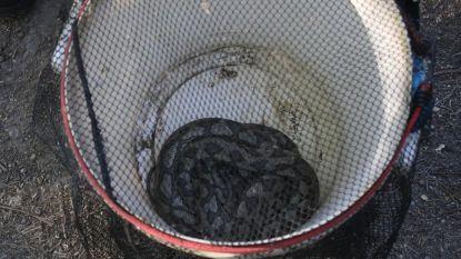 Brandweer vangt slang van ruim twee meter