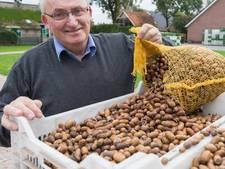 Staphorstse kinderen verzamelen tien ton Hollandse eikels