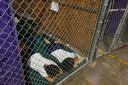 De foto's uit 2014 tonen aan dat de situatie aan de grens al onder president Obama gaande was