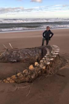 """Un mystérieux squelette retrouvé sur une plage en Écosse: """"C'est le monstre du Loch Ness"""""""