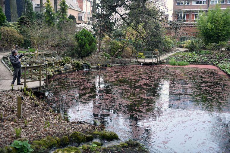 De Kruidtuin in Leuven staat in bloei.