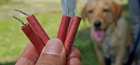 Hond in Winterswijk komt om het leven doordat vuurwerk in bek ontploft