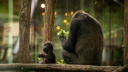 Zoo lokt 1,175 miljoen bezoekers