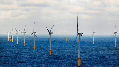 Windmolens blijken hotspots voor mariene biodiversiteit