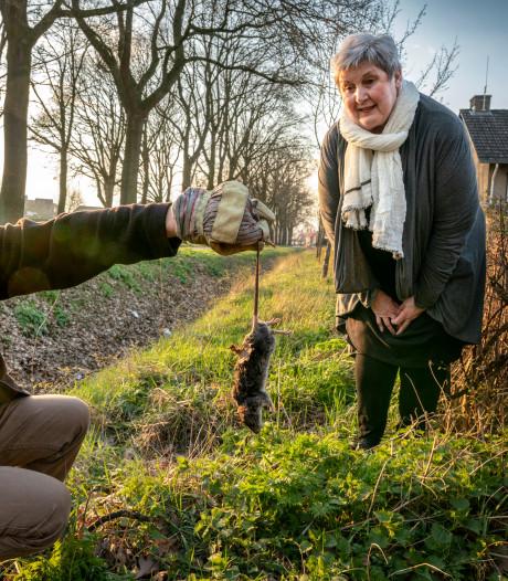 Ratten teisteren Wijbosch en Corrie is 'doodsbang'