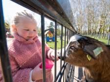 Handreiking voor Alphense kinderboerderijen: extra geld voor personeel