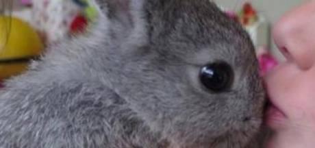 Enkeltje Bonaire voor dwergkonijn Stampertje kost gezin 500 euro