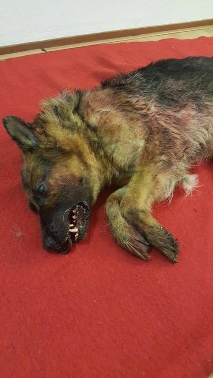 De politie is op zoek naar de eigenaar van de in een kledingcontainer gedumpte herdershond. Foto: Politie