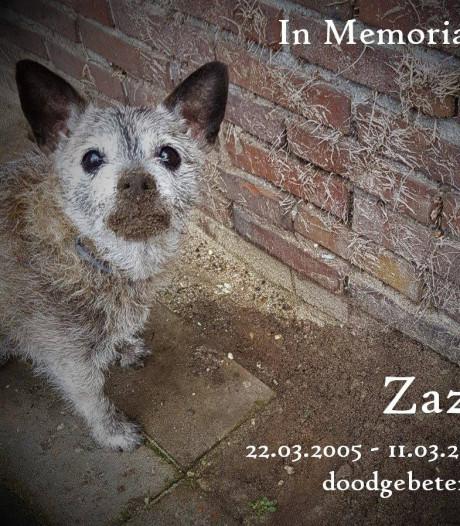 Doodgebeten hondje Zaza druppel voor dierenarts: 'Er moet wat veranderen'