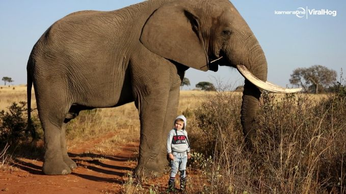 Jongetje (4) komt oog in oog te staan met olifant