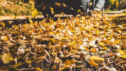 Opgepast: bladeren kunnen even glad zijn als sneeuw