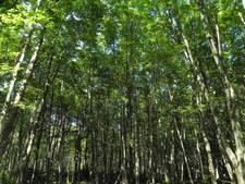 Bomen voor Levensbomenbos in Rosmalen zijn te koop