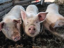Prijs voor eten sterkst gestegen in 10 jaar: boer profiteert niet, overheid wel