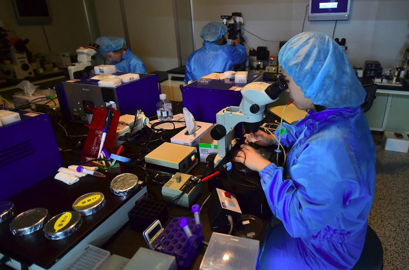 In het lab bij Sooam Biotech, het Zuid-Koreaanse bedrijf dat de hond kloonde