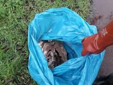 Alweer een dode zwaan in Harderwijk