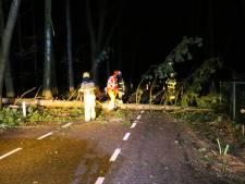 Omgevallen boom blokkeert weg tussen Beekbergen en Hoenderloo