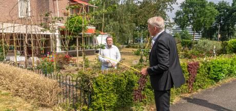 Buren in Zwolle ergeren zich groen en geel aan elkaar: is de heg te hoog?