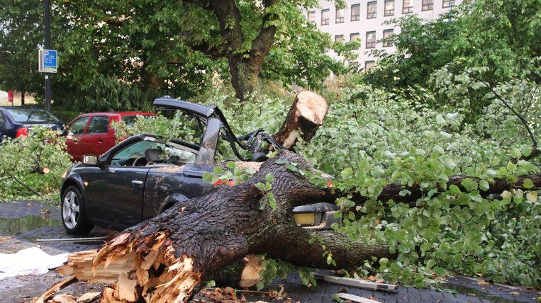 In Rotterdam is een dode gevallen door het noodweer, nadat een boom op een auto belandde.  Beeld ANP