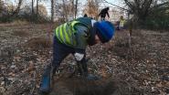 Kleuters planten nieuw bos aan
